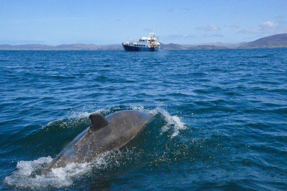 Dolphin off Emma Jane