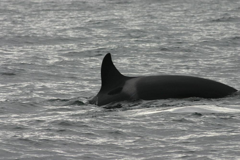 W10 - Occasus (Female)