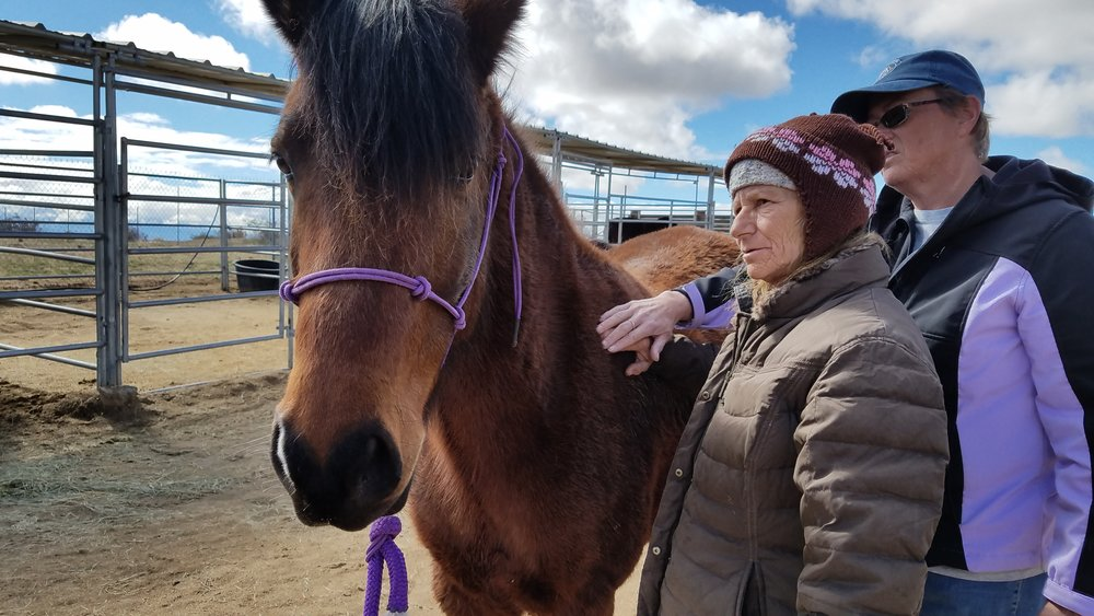 Darlene and Terry working on a rescue horse at Lifesavers Wild Horse Rescue in Lancaster.