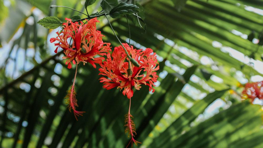 Kew_Gardens_14.jpg