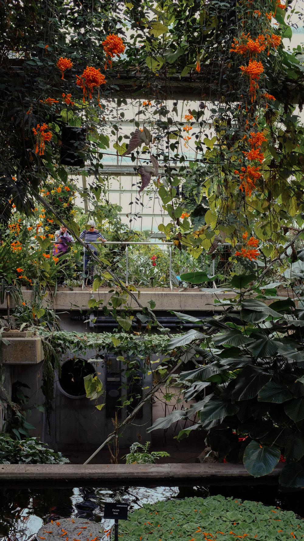 Kew_Gardens_26.jpg
