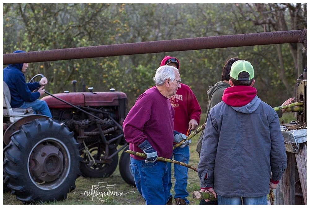 Feeding the Cane - A Florida Cane Grinding - Ashley Corinne Photography