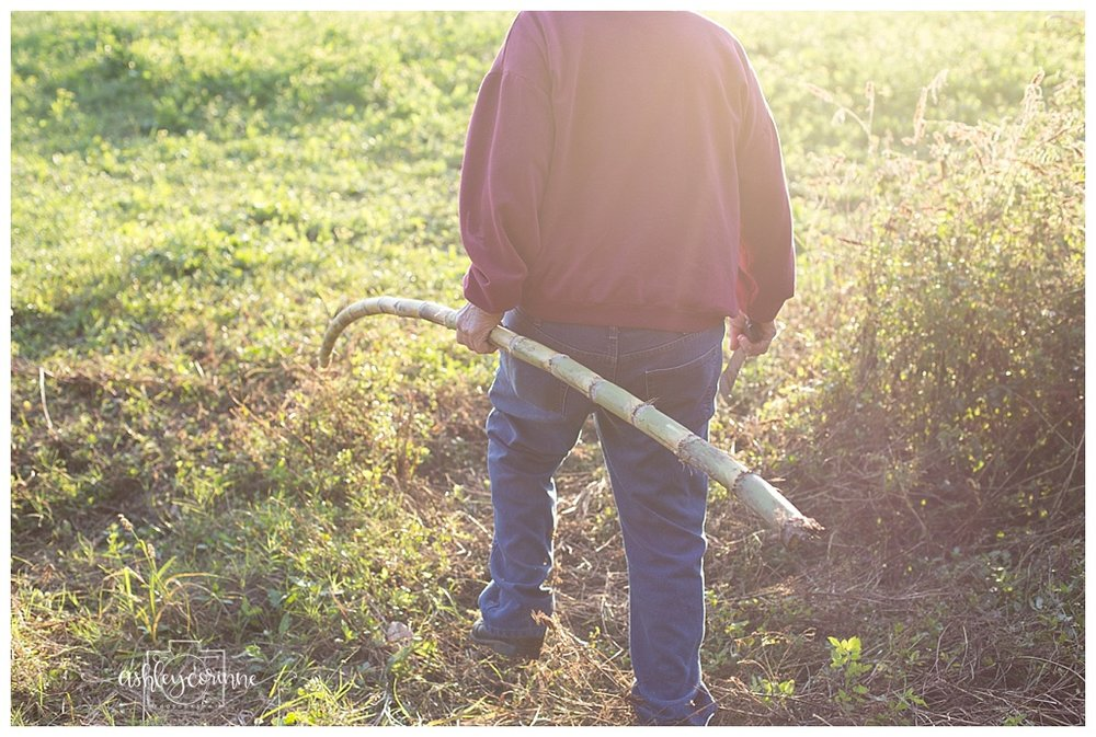 In the Field  - A Florida Cane Grinding - Ashley Corinne Photography