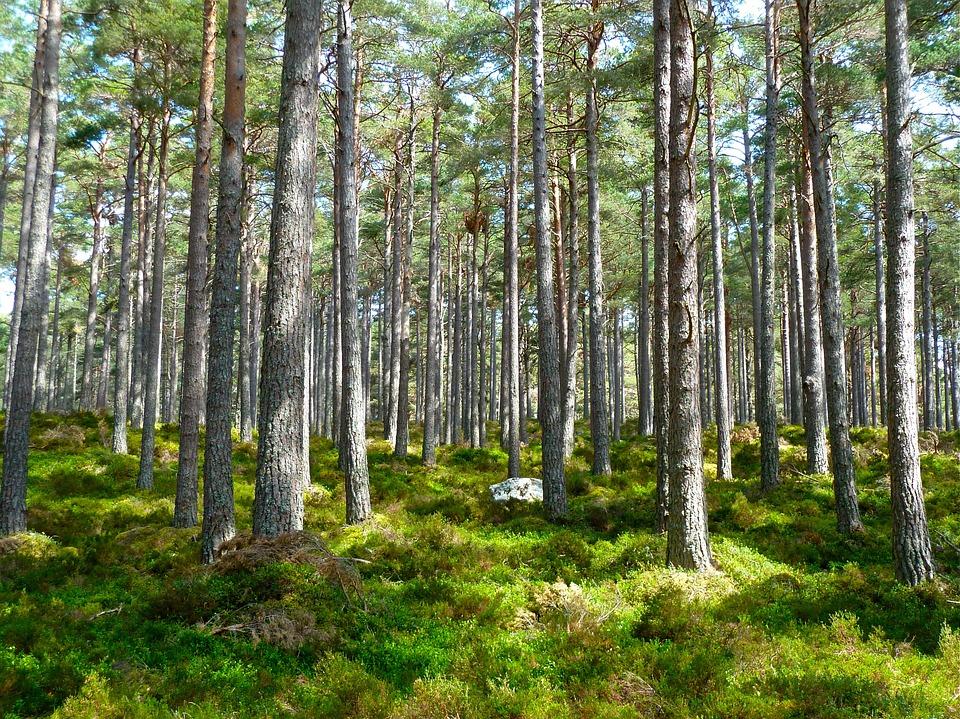 forest-272595_960_720.jpg