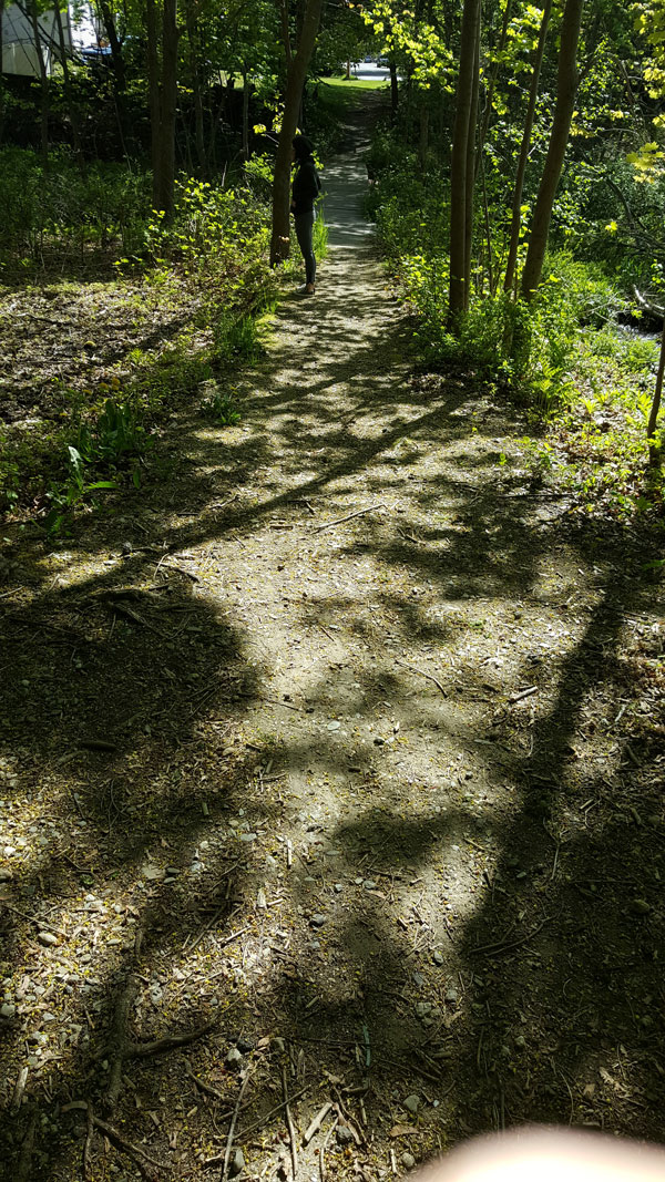 Path toward the bridge over Trout Brook