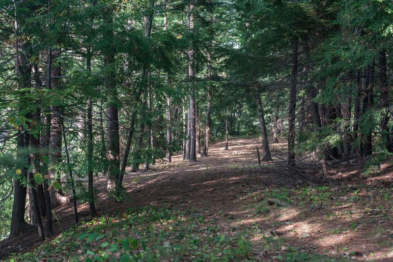 Long Creek Trail (credit: Denise Michaud)