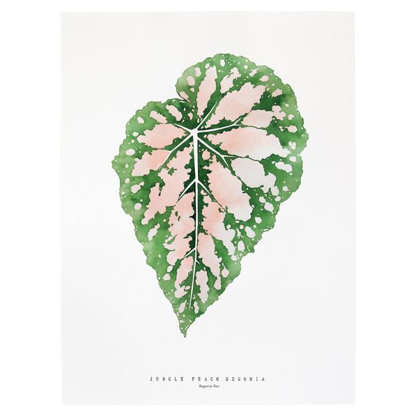 Jungle Peach Begonia by Living Pattern