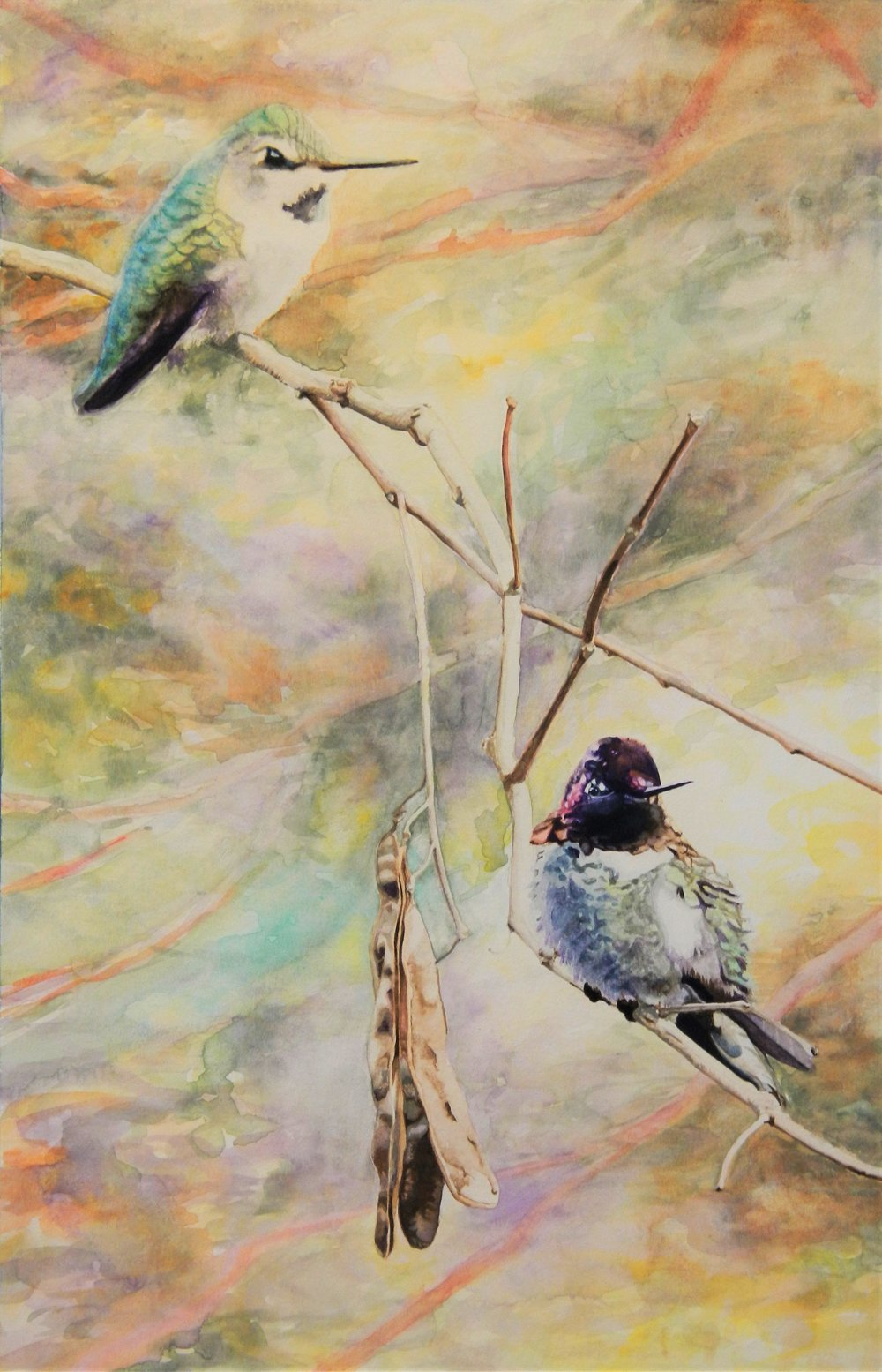 Hummingbirds in January  Watercolor on paper. 11 x 17 in.