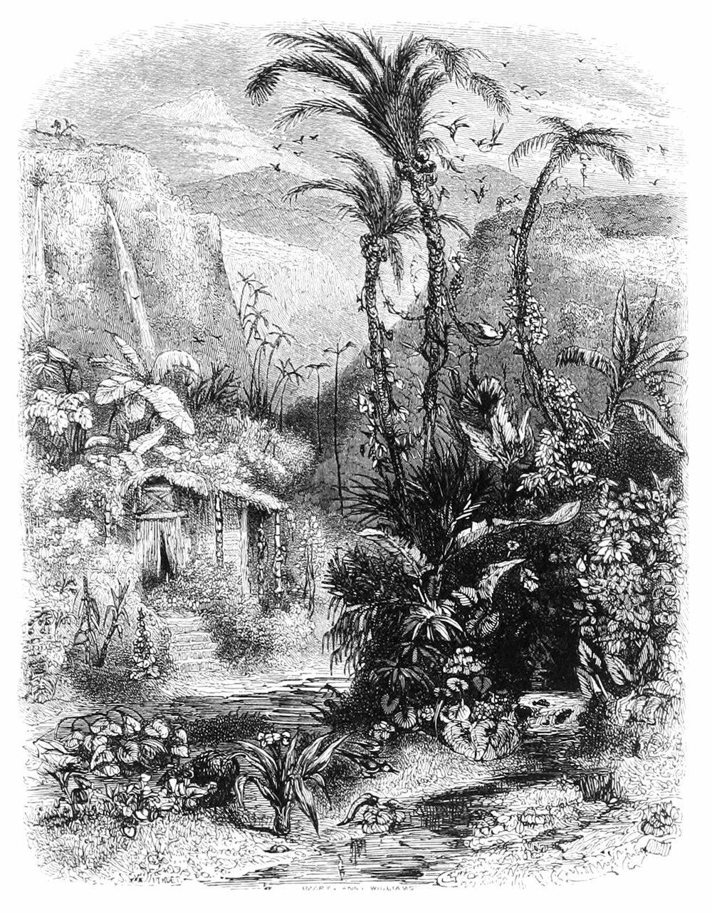 Wood Engraving by Mary Ann Williams of 'The Pariah's Garden at Dawn', by Paul Huet from the book  Paul et Virginie by Jacques-Henri Bernardin de Saint-Pierre, 1838
