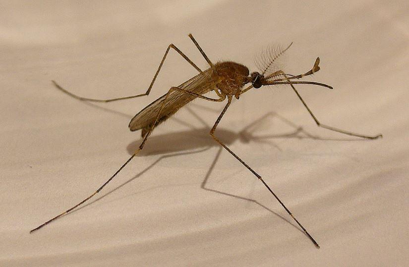 Mosquito Control ROGA Drone