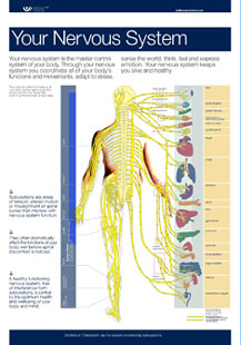 Your Nervous System Wall Chart.jpg