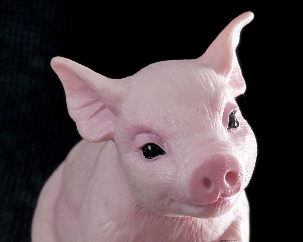Questioning Pig
