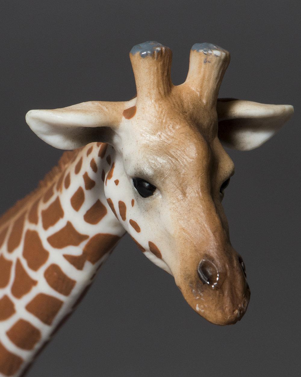 Giraffe Head