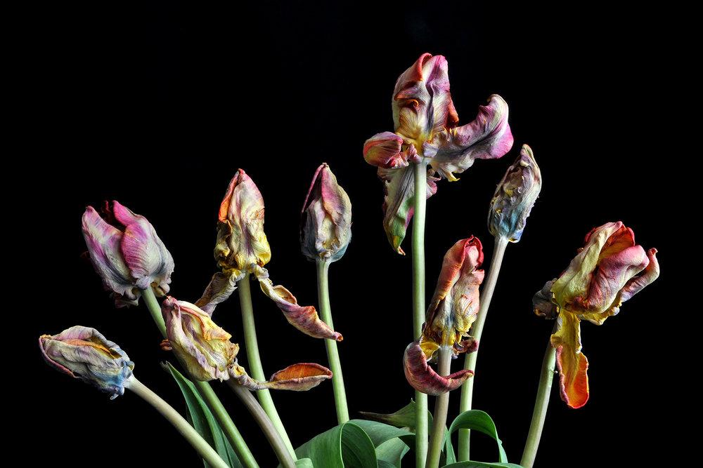 Tulip Spray
