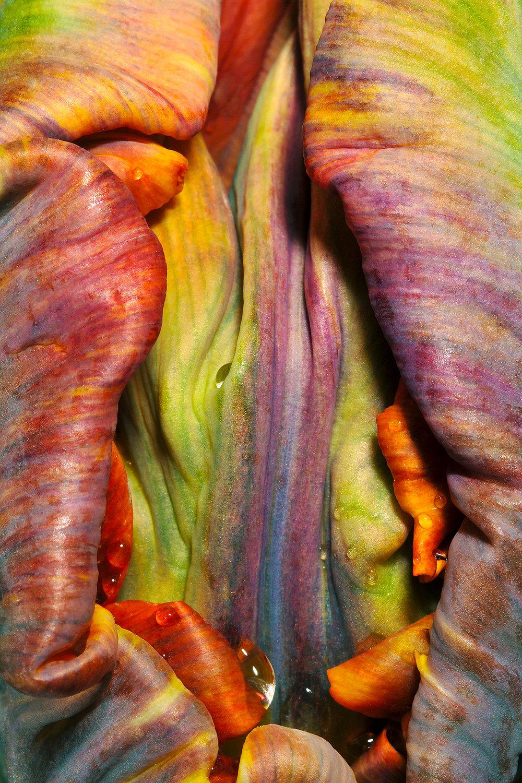 Moist Tulip
