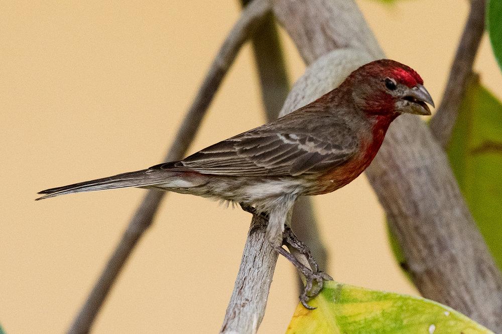 Finch #2