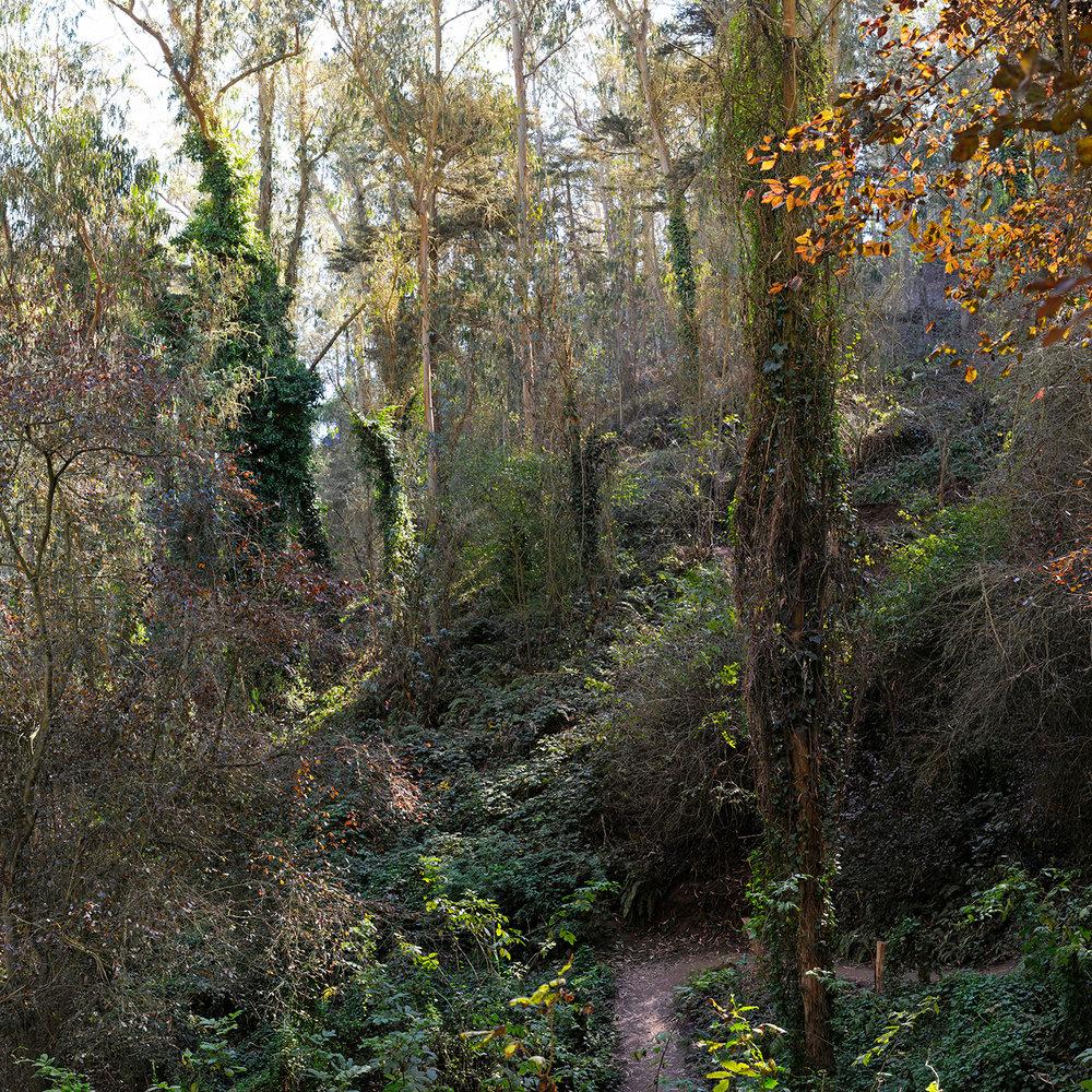 Fairy Gates Trail