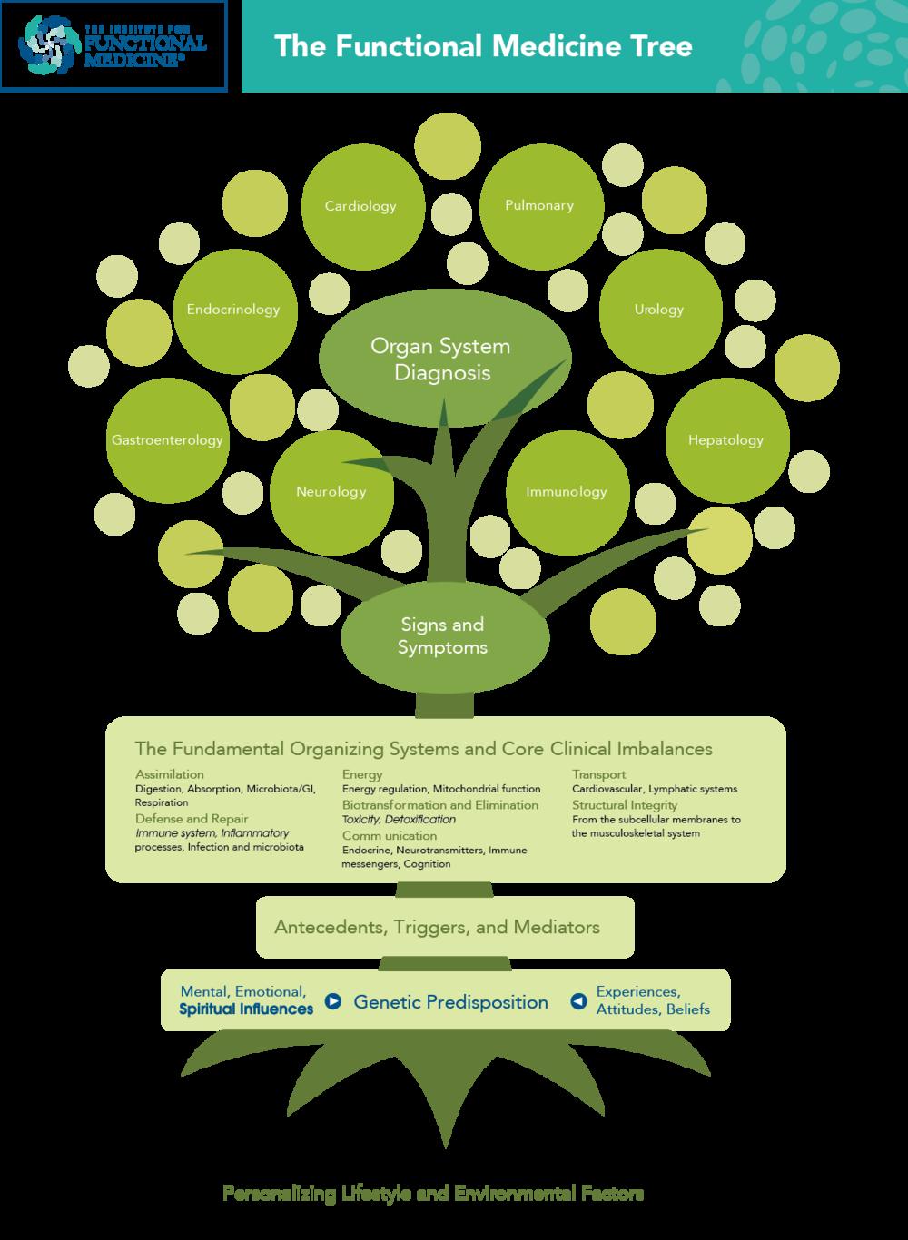 IFM - Functional Medicine Tree_v2.png