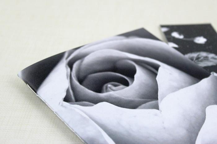 rose_bl_wh-3