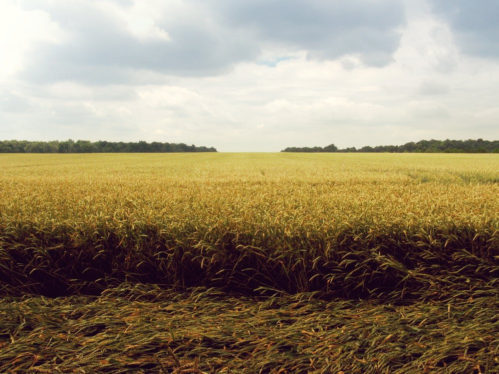 fields and sky.jpg