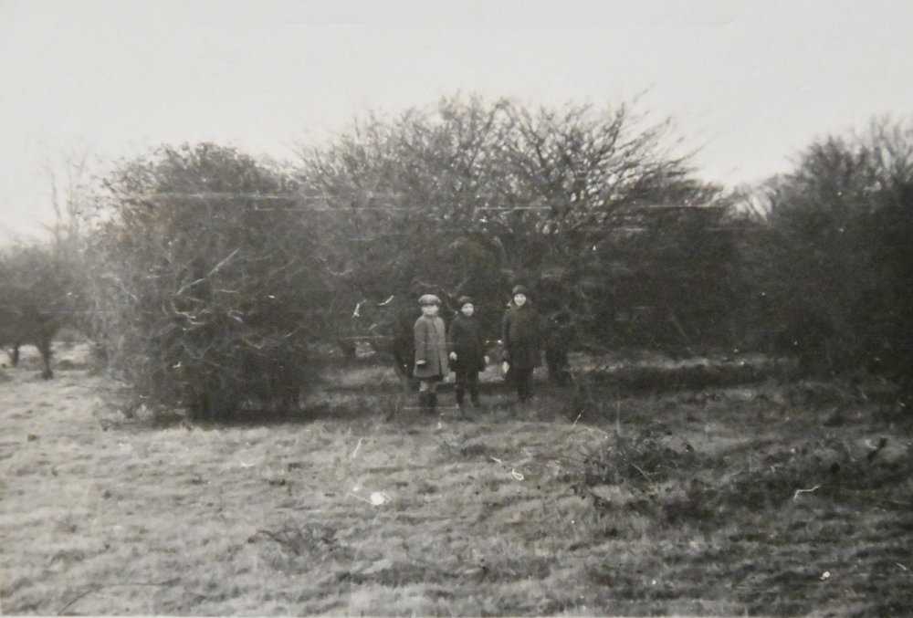 In 1941 Knepp was covered in scrub. Charlie's father Raymond and his two aunts stand in front of shrubs about to be pulled up as part of the Dig for Victory campaign to turn wasteland into arable.