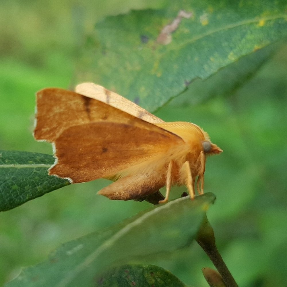 The quirky-looking September Thorn looking like a raggedy leaf