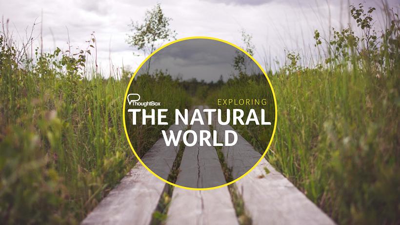 Natural world.png