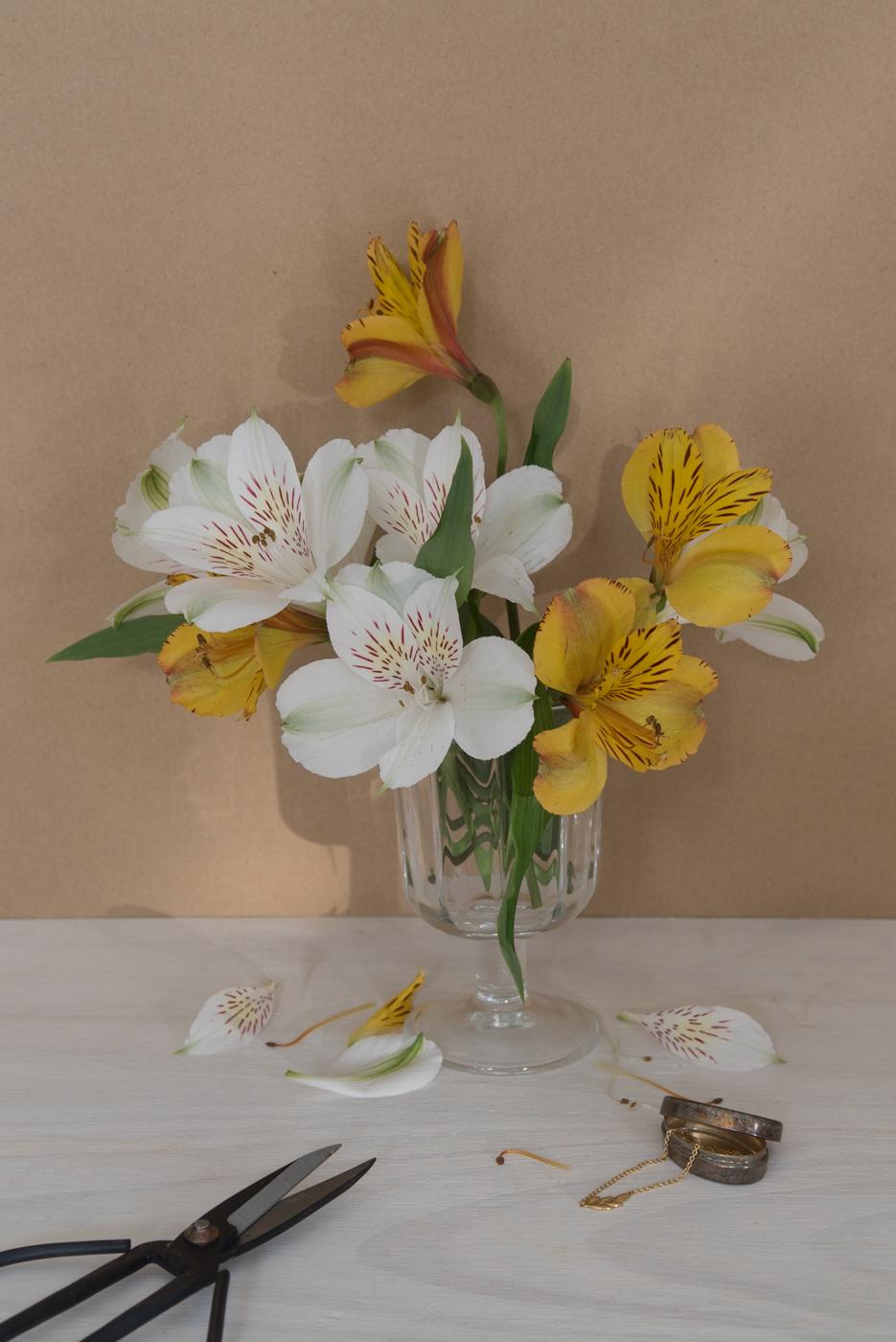 Flores amarillas y blancas