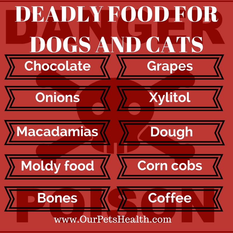 top 10 deadly and poisonous foods for cats and dogs list
