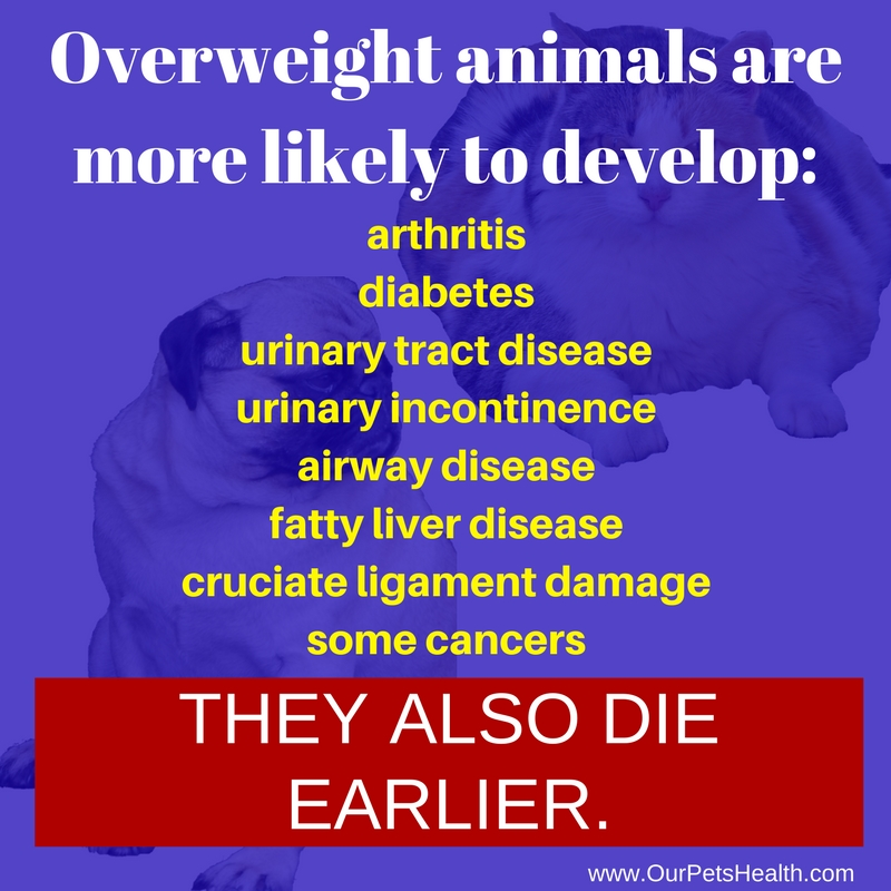 the dangers and risks of obese, fat and overweight cats and dogs