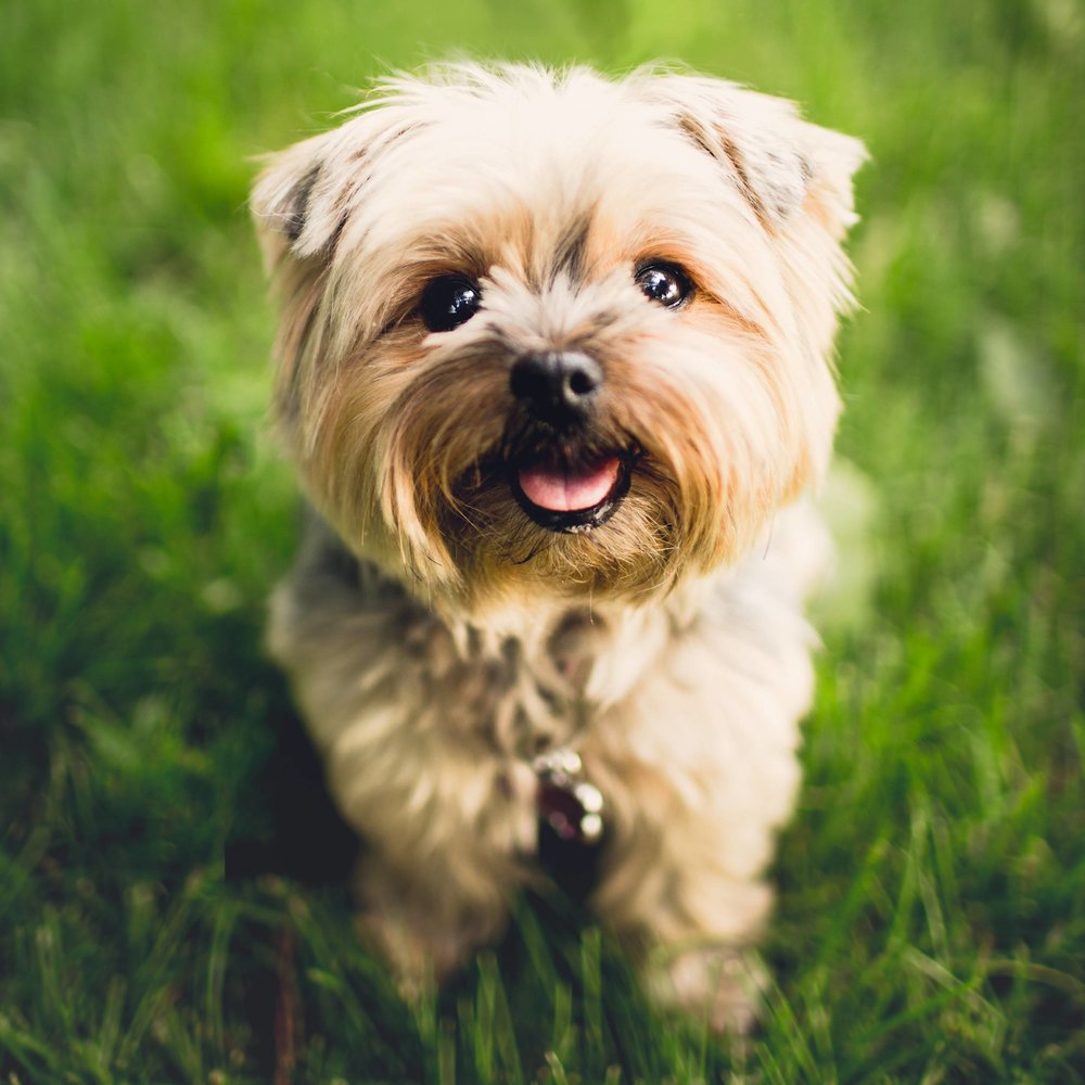 cute puppy sitting on grass smiling