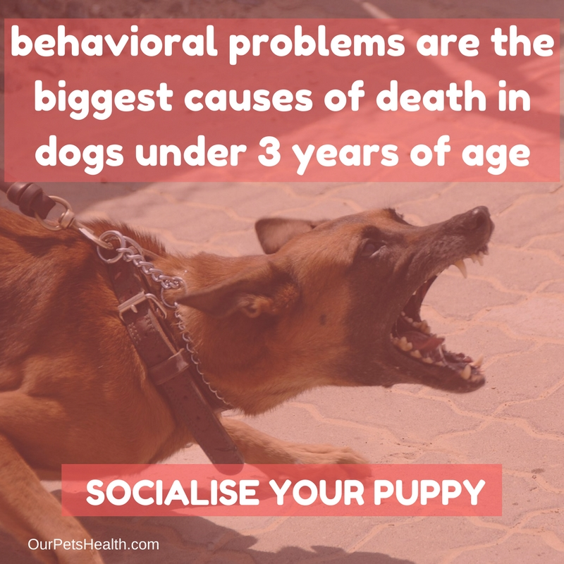 behavioural problems are the biggest cause of death in dogs under 3 years of age