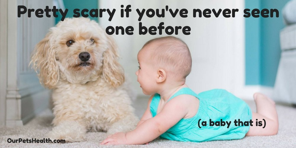 socialise your puppy with the family, including babies and children