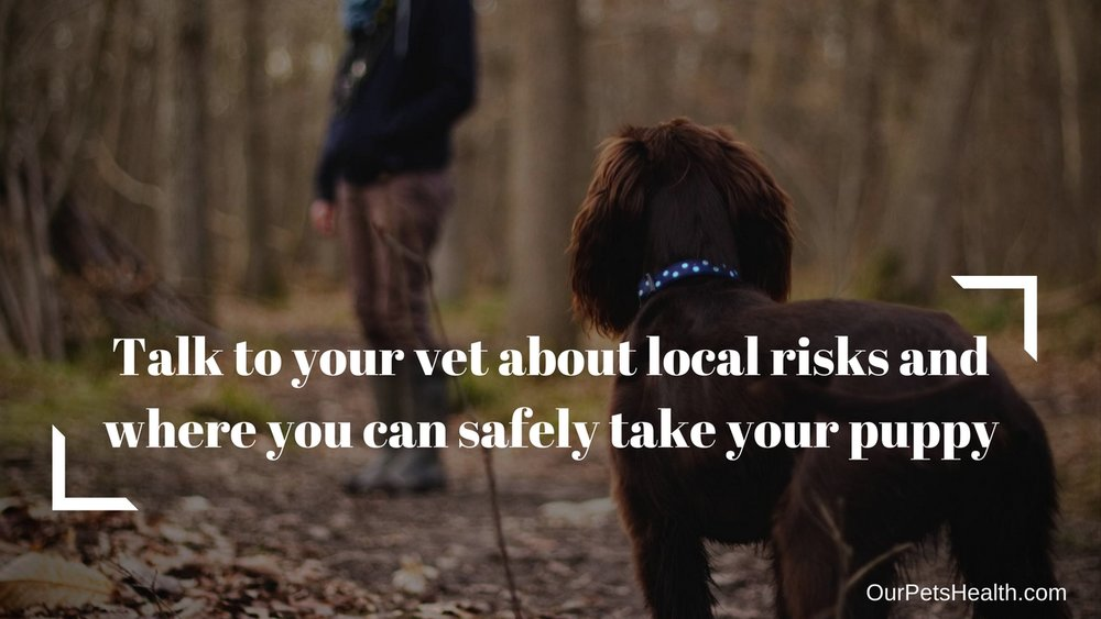 Talk to your vet about local risks and where you can safely take your puppy