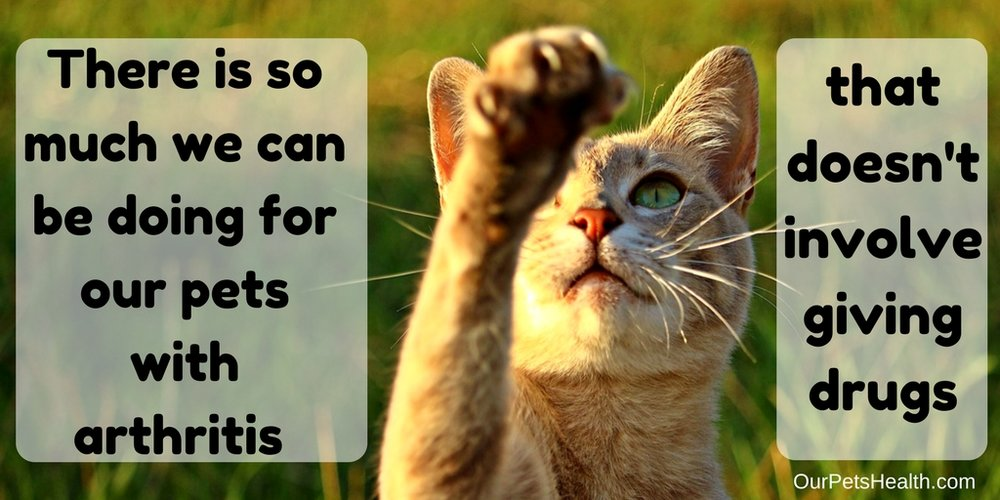 poster of a cat which says there is so much we can be doing for our pets with arthritis that doesn't involve giving drugs.