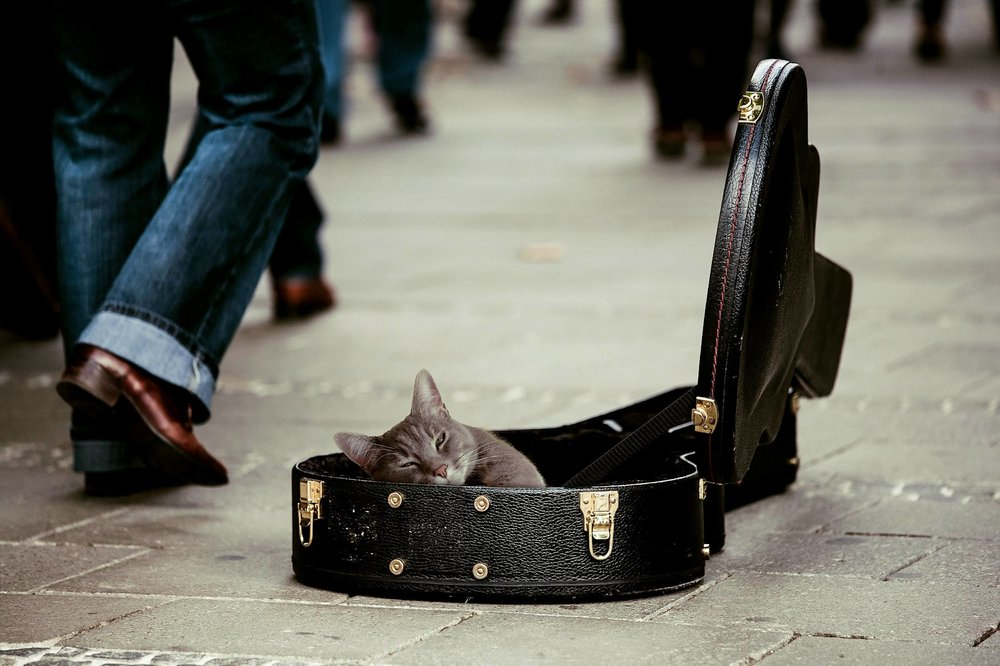 busker cat in guitar case