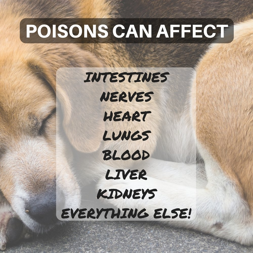 POISONS CAN AFFECT INTESTINES, NERVES, HEART, LUNGS, BLOOD, LIVER, KIDNEYS and EVERYTHING ELSE!