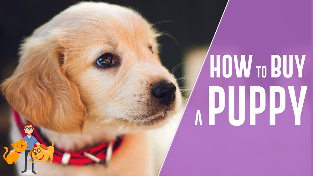 how to buy a healthy puppy