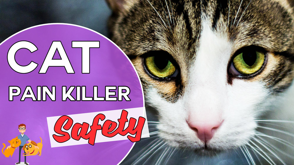 cat painkiller safety, are they worth the risk?