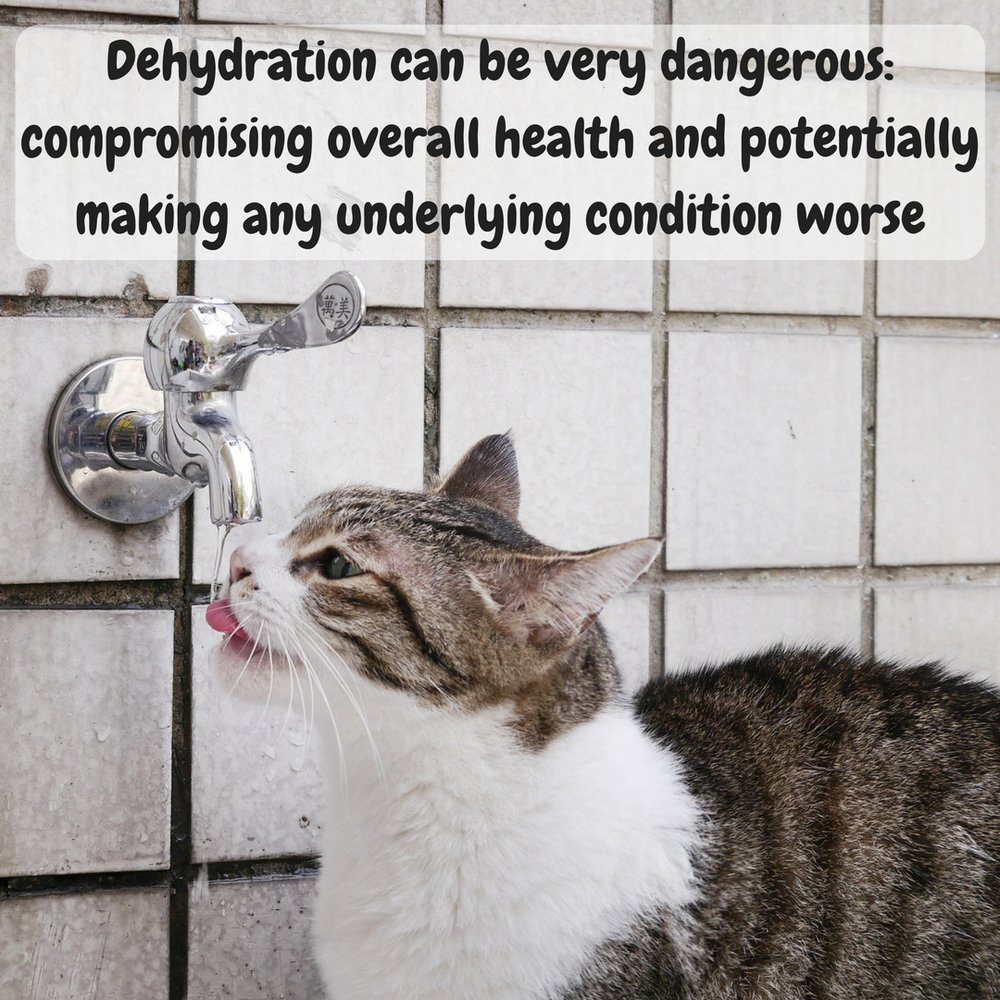 Dehydration can be very dangerous, compromising overall health and potentially making a cats condition worse