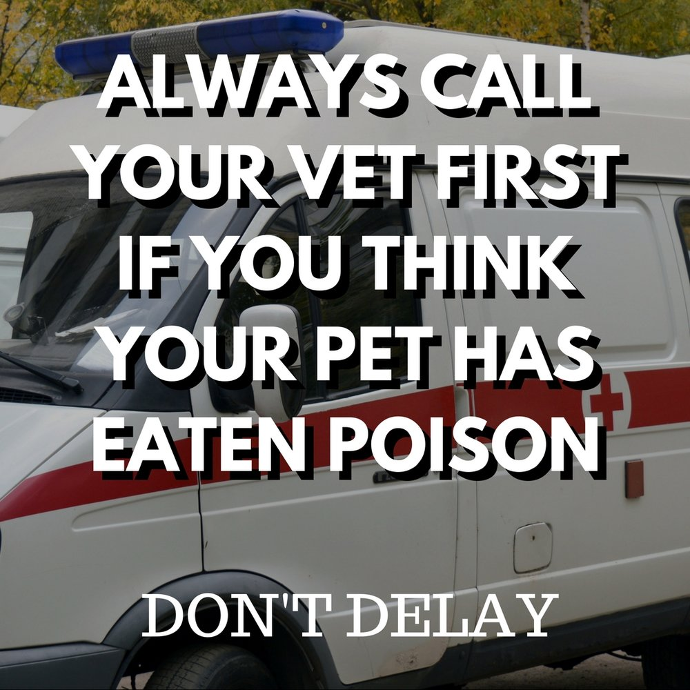 ALWAYS CALL YOUR VET FIRST IF YOU THINK YOUR PET HAS EATEN POISON and don't delay