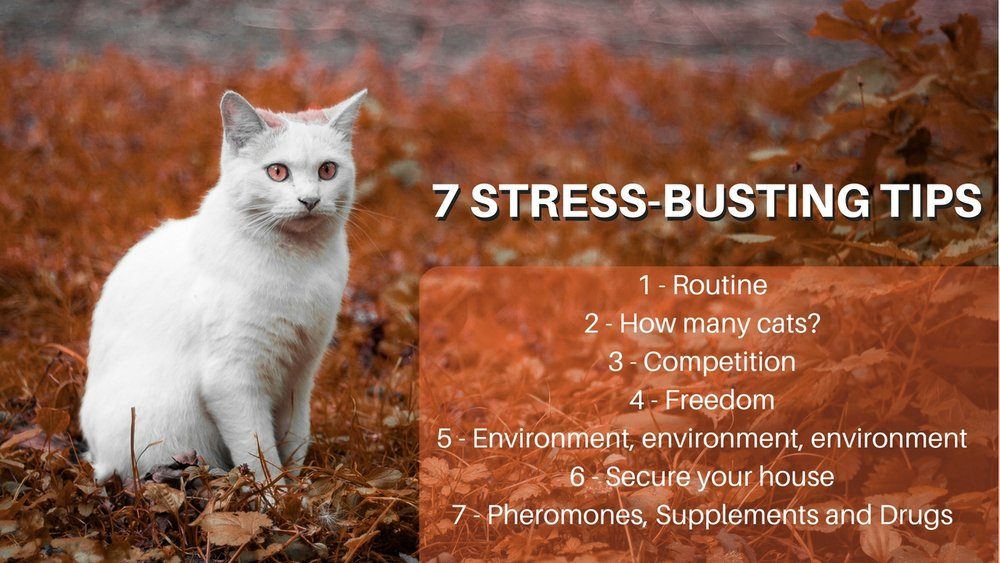 7 simple stress busting tips to reduce stress in cats