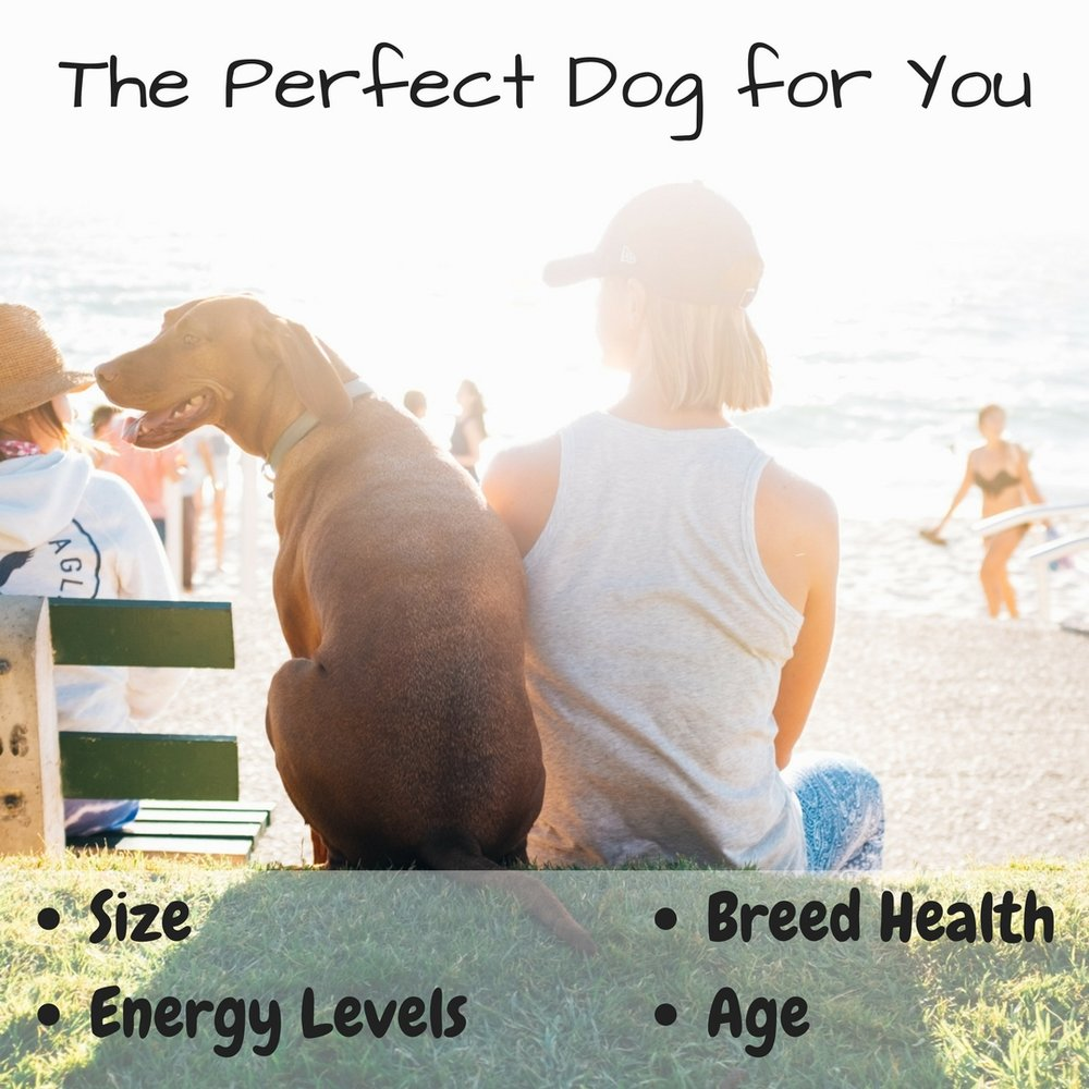 4 steps to finding the best dog for your family