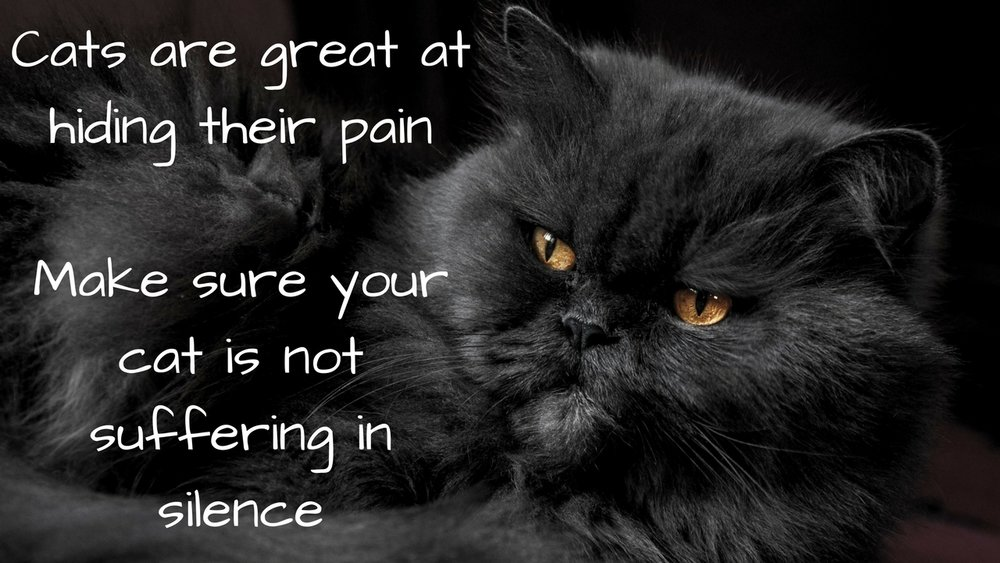 Cats are great at hiding their pain. Make sure your cat is not suffering in silence from the pain of arthritis