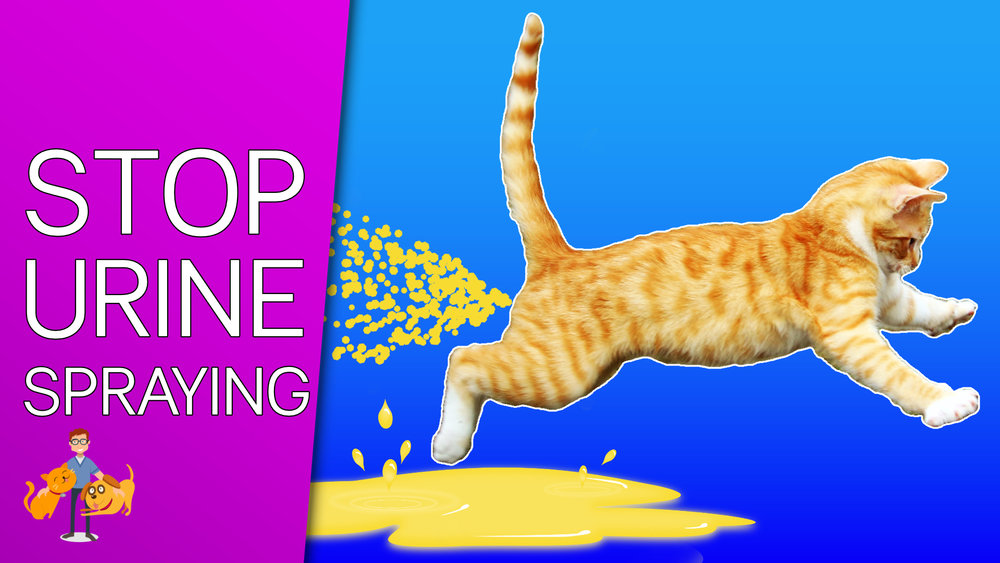 How To Stop A Cat From Peeing Everywhere In 9 Simple Steps Our