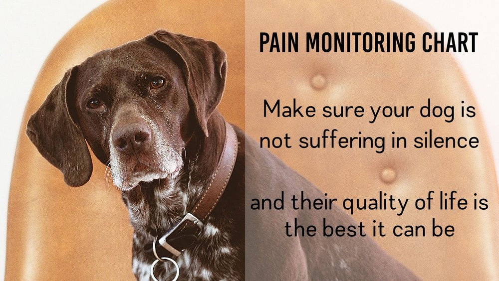 make sure your dog is not painful with my pain monitoring chart