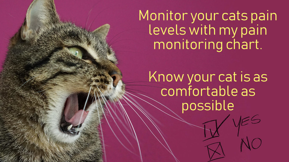 make sure your home management of arthritis is working and that your cat is not in pain