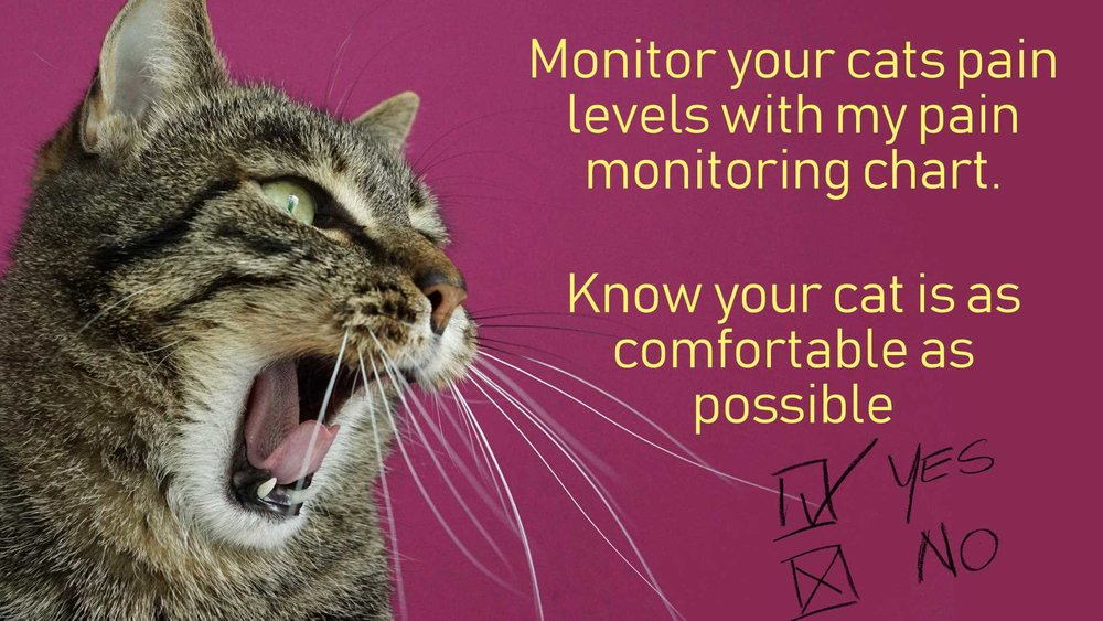 regularly reassess your cats comfort with this pain monitoring chart