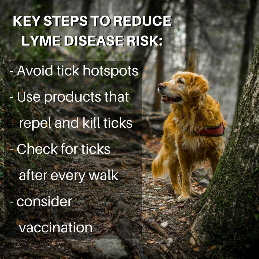 the key steps to preventing lyme disease in dogs