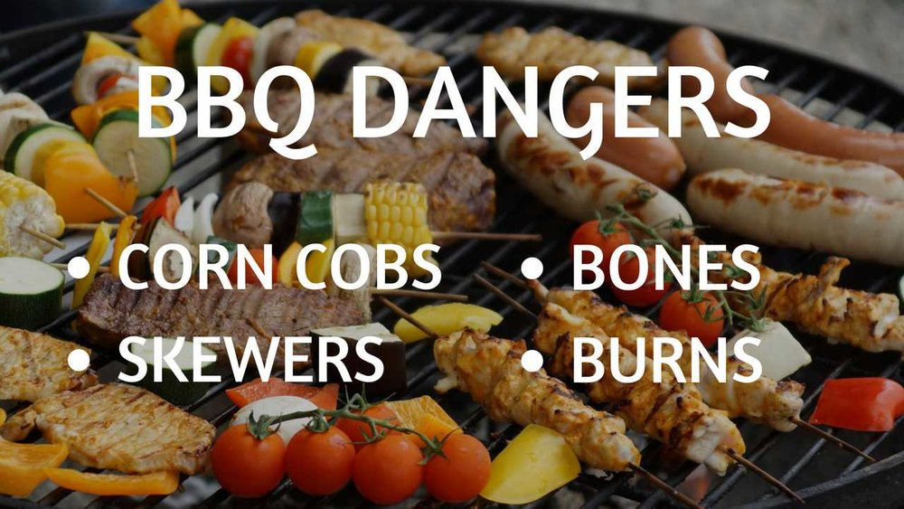 summer BBQ dangers for dogs and cats include corn cobs, bones, kebab skewers and the risk of burns